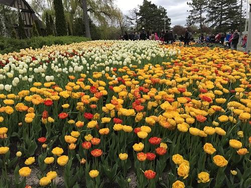 Festival de los Tulipanes 2