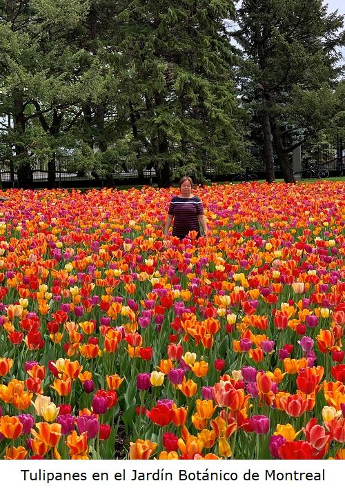 Tulipanes en el jardin Botanico de Montreal