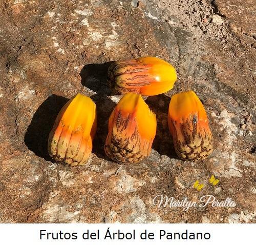 Frutos del Arbol de Pandago