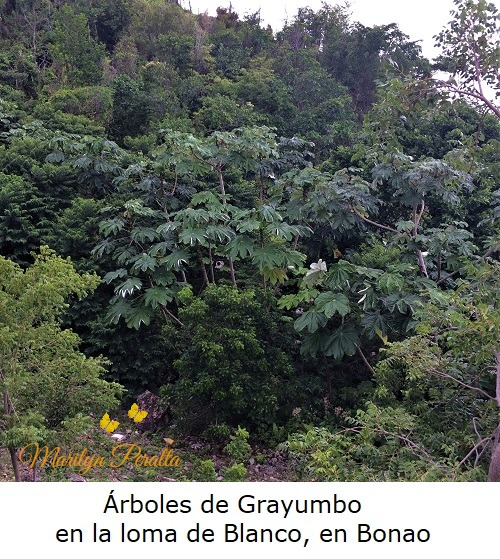This image has an empty alt attribute; its file name is arboles-de-grayumbo-en-la-loma-de-blanco.jpg